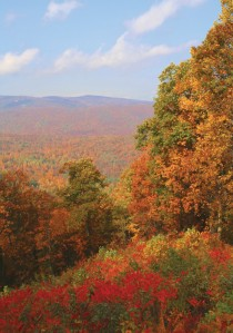 Shenandoah Autumn Leaves